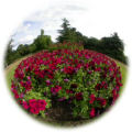Fisheye - Flower Garden