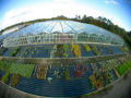 Fisheye - Greenhouse